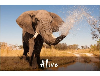Safari South Africa Private Tour